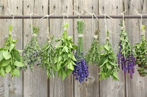 Lavender and aromatic plants