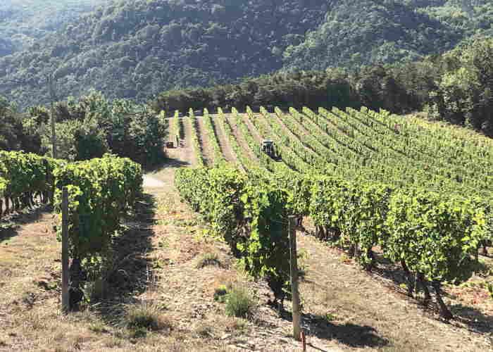 Clairette de Die wijngaard landschap
