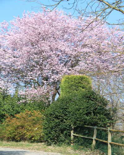 Frühlingslandschaft auf dem Campingplatz