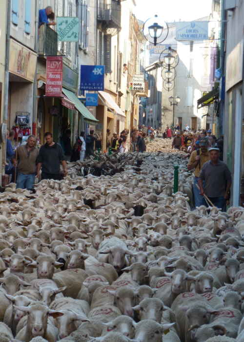 Transhumance in the centre of Die