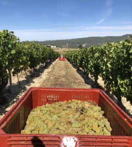 die Ernte in der Drôme