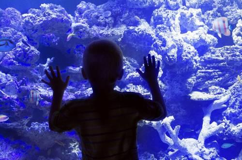 Aquarium d'Allex