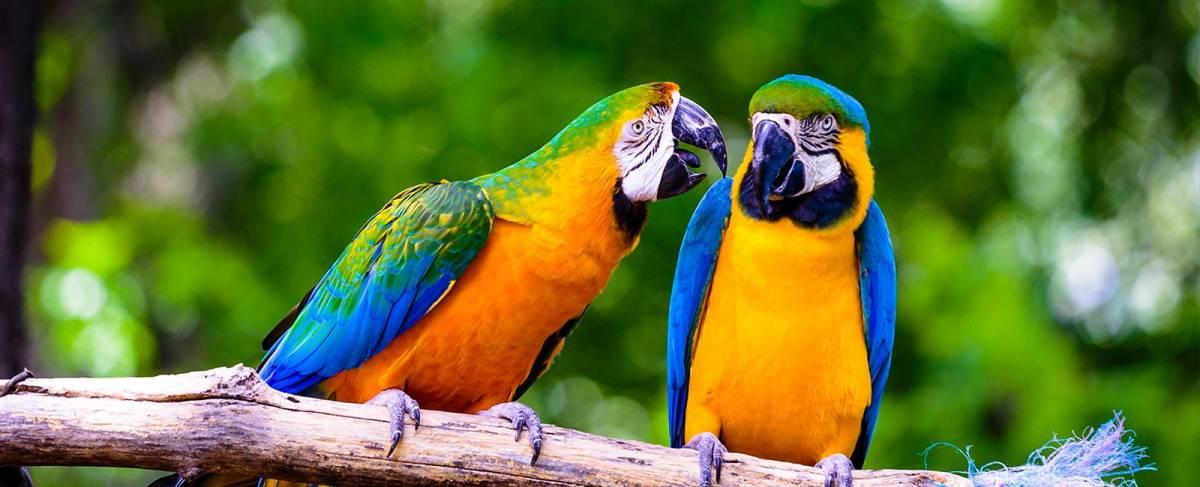 Jardin aux oiseaux d'Upies