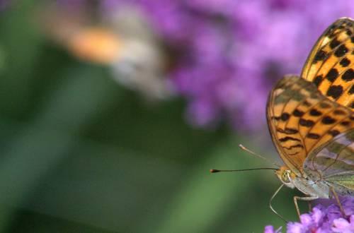 Jardin des Découvertes et des papillons à Die